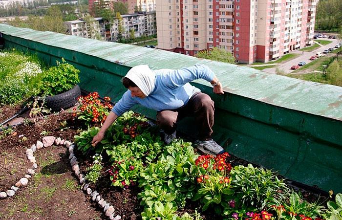 Иногда жильцы верхних этажей самовольно разбивают на крышах домов огороды — это незаконно
